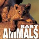 Baby Animals by Angela Idos (Book) 2004