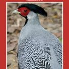 Game Bird Breeders Handbook (Trade Paperback)