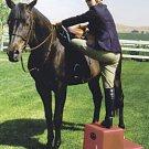 2 Step Horse Mounting block Tan High Country Plastics