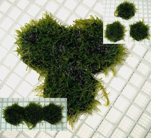 Java moss carpet grown on 2 inch hexagon tiles