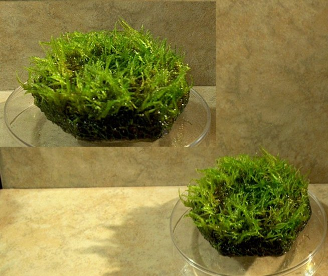 Java Moss on hexagon tile