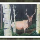 Elk in Birch Forest