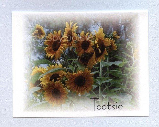 Mini Sunflowers