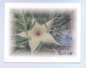 Cactus Pod Flower