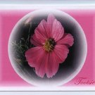 Pink Flower with Pink Background
