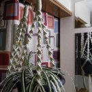 LOT 2 Macrame Plant Hangers PEARL TAN BEADS