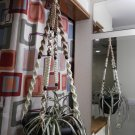 Macrame Plant Hanger SAND and IVORY 8 DARK BROWN BEADS
