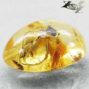 4.71 CT.Natural Oval 11.5*17 mm. Headless Tiger Moth Fossil Yellow Copal Gems