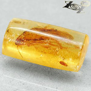 7.35 CT.Natural Cylinder 10*20 mm. Clear Cockroach Fossil Brandy Yellow Copal