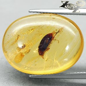 9.5 CT.Natural Oval 16.5*22 mm. Perfect Water Bug Fossil Madagascar Yellow Copal