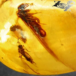 11.56 Ct.Natural Oval 17.8*18 mm Flying Insect Fossil Madagascar Yellow Copal �巴