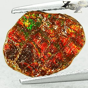 Rare Grade Natural Iridescence Play Rainbow Color Dragon Skin Ammolite 1.4 Ct.