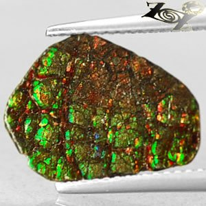 Natural Iridescence Extreme Play Green Red Color Dragon Skin Ammolite 1.35 CT.