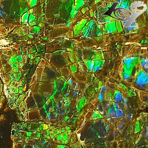 4.5 CT.Rare Natural Iridescence Play Green Blue Color Brown Canada Ammolite Slab