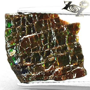Natural Iridescence Extreme Play Red Green Color Dragon Skin Ammolite 1.58 CT.