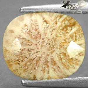3.07 Ct.Natural Oval 9*11 mm. Flower Polyp Pattern Cream Yellow Calcareous Coral
