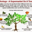 Moringa Tree's 4$ale ... cheaper price than ebay! ;)