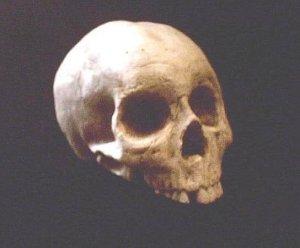 Human Half Skull Statue Voodoo Skeleton Bone Gothic Halloween Horror Prop