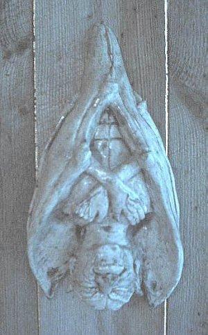 HANGING VAMPIRE GOTHIC WALL HANGING DRACULA HALLOWEEN BAT PROP NOSFERATU