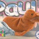 TY Beanie Baby Card # 215 Paul the Walrus-Style # 4248-2nd Ed -Ser 4-1999