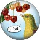 Talking Birds 1 Inch Pinback Button Badge Pin - 4018