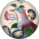 Talking Birds 1 Inch Pinback Button Badge Pin - 4023