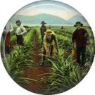 Working in Pineapple Fields of Hawaii, One Inch Ephemera Lapel Pin Button Badge - 0905