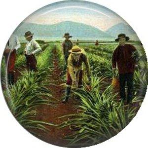 Working in Pineapple Fields of Hawaii, One Inch Ephemera Lapel Pin Button Badge - 0905