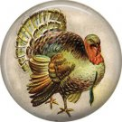 Turkey, 1 Inch Pinback Button of Vintage Thanksgiving Image - 0324