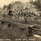 Rose City Michigan Postcard, Cherry Trees in Bloom, Black & White Real Photo c.1940