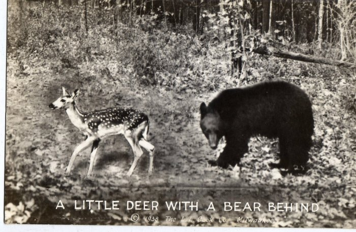 Humorous Postcard, Little Dear with a Bear Behind, Black & White Real Photo c.1938