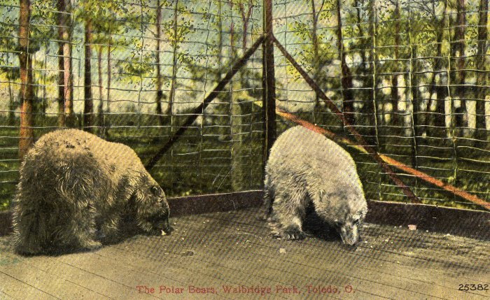 Toledo Ohio Postcard, Polar Bears at Walbridge Park c.1908