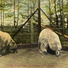 Toledo Ohio Postcard, Polar Bears at Walbridge Park c.1908
