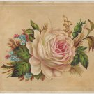 Graduation Souvenir Card, Roses & Forget-Me-Nots, Teacher Photo on Back c.1906