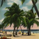 Miami Beach Florida Postcard, Private Beach, Full Color c.1952