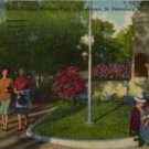 St. Petersburg Florida Postcard, Williams Park, Full Color c.1949