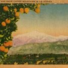 California Postcard, Orange Groves & Snow Capped Mountains c.1941