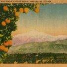 California Postcard, Orange Groves & Snow Capped Mountains c.1941