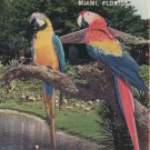 Parrot Jungle & Gardens Tourist Brochure, Miami Florida c.1986