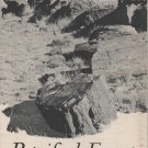Petrified Forest National Monument Arizona Guide Book c.1949