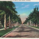 Florida Postcard, Royal Palm Drive, Full Color c.1930