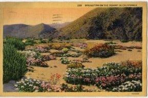 California Postcard, Springtime Flowers in The Desert, Full Color c.1931