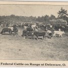 Delaware Ohio Postcard, Cattle Grazing on Federal Range, Black and White c.1927