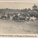 Delaware Ohio Postcard, Cattle Grazing on Federal Range, Black and White c.1927