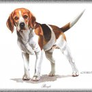 Beagle dog canvas art print
