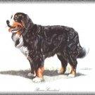 Berner Sennenhund dog canvas art print