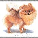 Deutscher Spitz Dog canvas art print