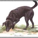 Labrador Retriever dog canvas art print