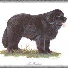 New Foundland dog canvas art print