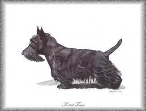 Scottish Terrier dog canvas art print